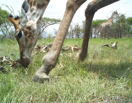 Close ups of the residents on UmPhafa Reserve!