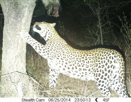 Exciting visitors to the UmPhafa Reserve!