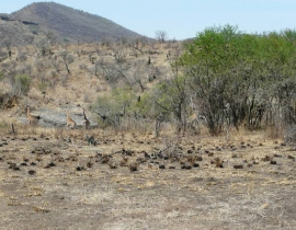Fences come down at UmPhafa Reserve