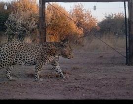 Carnivores caught on camera!