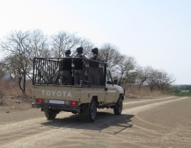 Poaching crisis continues