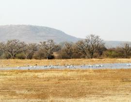 Brand new wetland area created at UmPhafa!