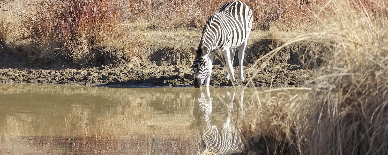 Conservation Talks
