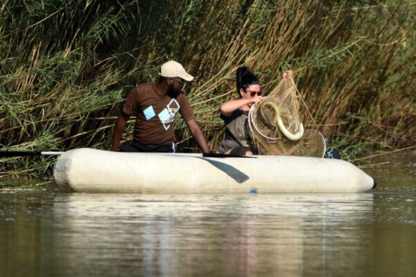 Research into the African Mottled Eel